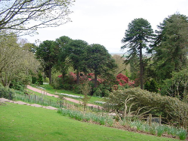 Markinch : Balbirnie Park, looking to Monkey Puzzle Trees