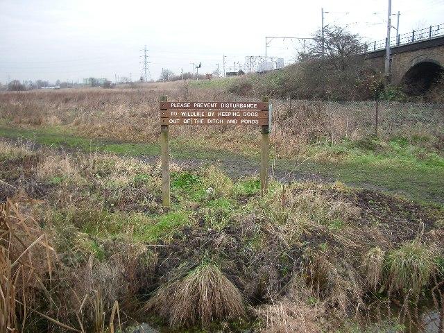 Walthamstow Marshes