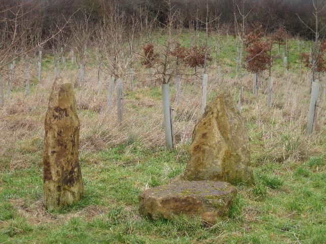 Hatherstone Millennium Wood.