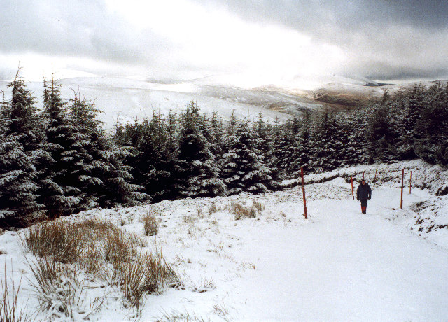 The track from Hearthstane to Broad Law emerges from the forest.