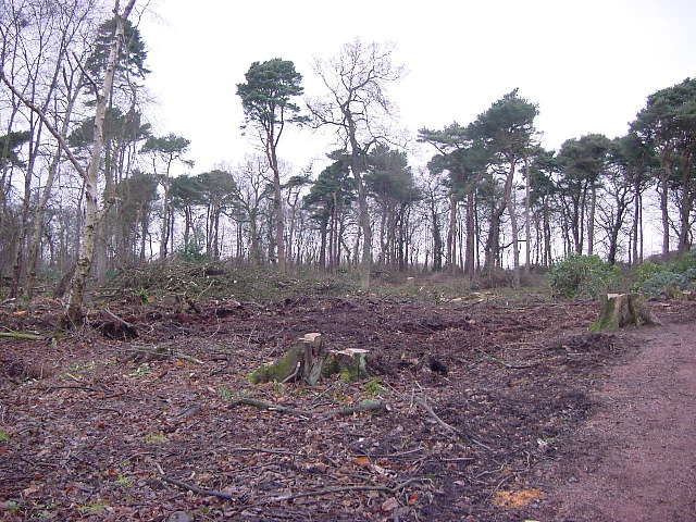 Kirkcaldy : Dunnikier Park : Garden Wood: after woodland management