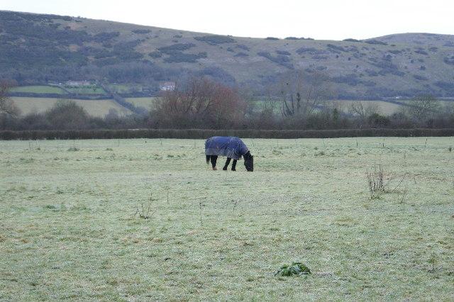 A Cold Horse