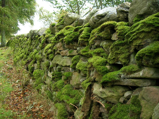 Stonewall at Clava Cairns