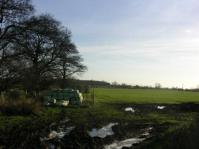 Fields off Grunton Lane, Manfield, North Yorkshire