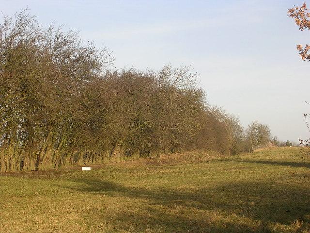 Old railway cutting, near Eppleby, near Richmond, North Yorkshire