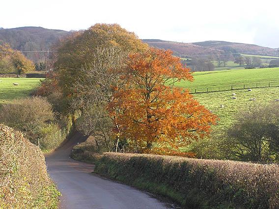 Autumn colours on Heddon Oak lane, looking to Quantocks