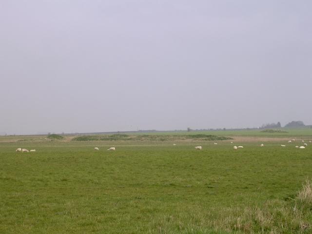 Sheep grazing on Wyke Down