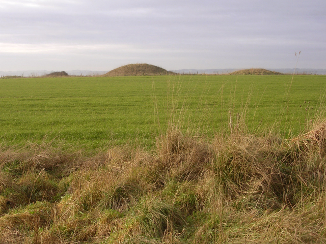 Round barrows on Handley Hill, close to the Ackling Dyke