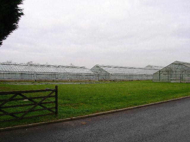 Newlands Nursery, near Runcton