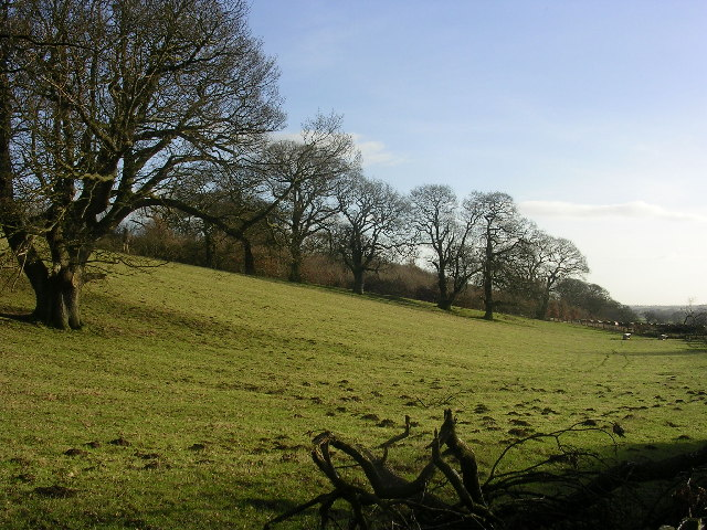 Parkland at Hartforth, near Richmond, North Yorkshire