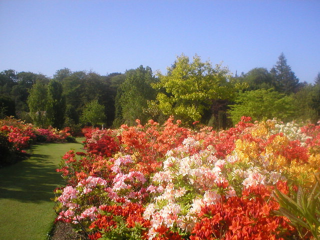The Azalea Garden at Hazlehead Park