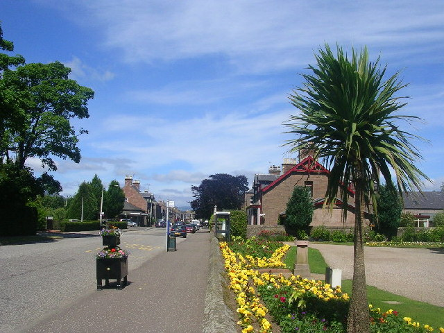 Palm Tree at Edzell