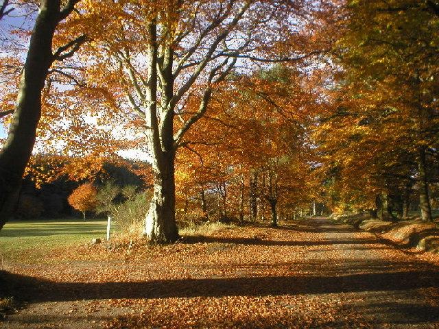 Hazlehead Woods in Autumn