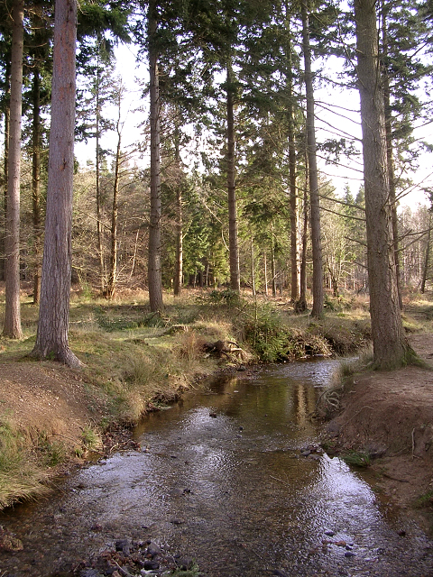 Bratley Water in the North Oakley Inclosure, New Forest