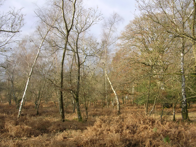 Barrow Moor, New Forest