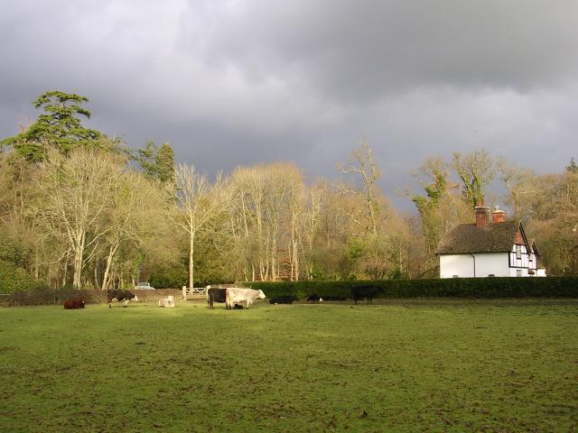 Bolderwood cottage, New Forest