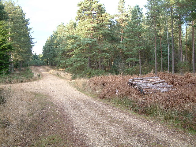 Forest track, Ringwood Forest
