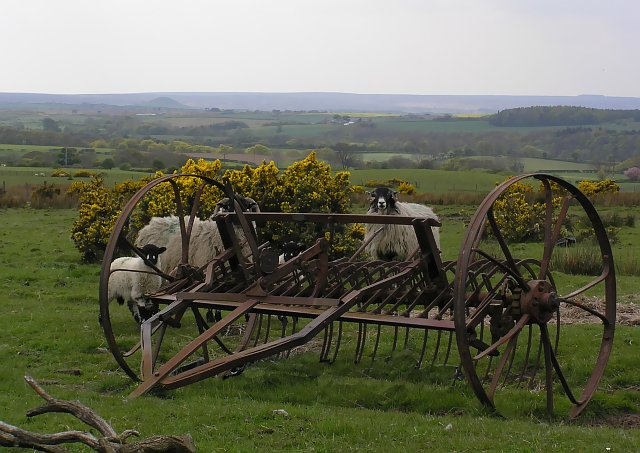 Old Hay rake - Moorhouse farm