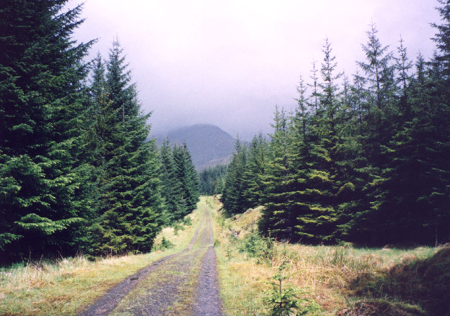 forest track