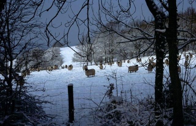 Cowleaze Wood nr Christmas Common