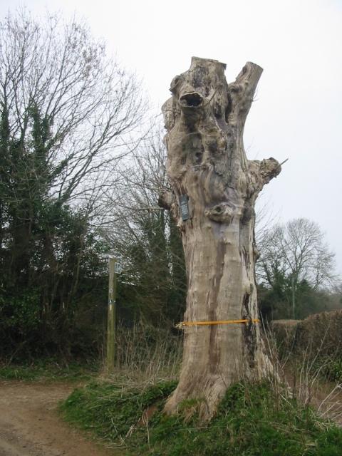 The Posy Tree, Mapperton