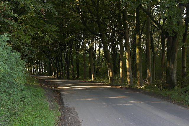 Trees in Aldro Plantation