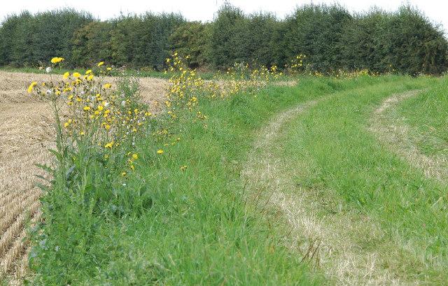 Field edge, Cawood Ings