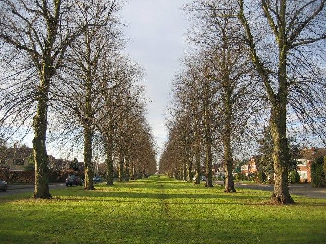 Avenue, Beverley Road