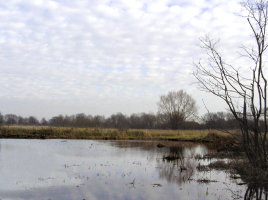 Hopton Fen, Suffolk