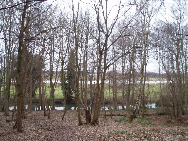 River Mole in the woods