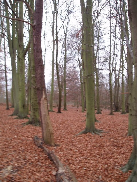 Winterdown Wood