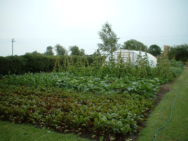 Charity Allotments