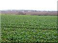 TF0800 : Sutton Heath, Peterborough by Rodney Burton