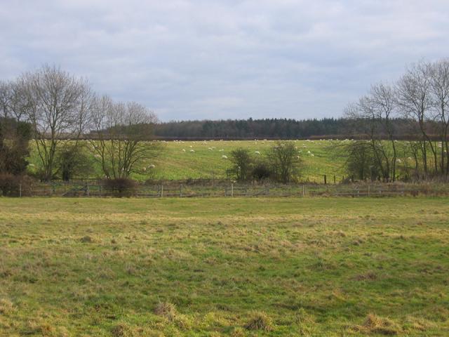 Farmland, Southorpe, Peterborough