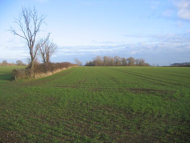 Farmland, Ufford, Peterborough