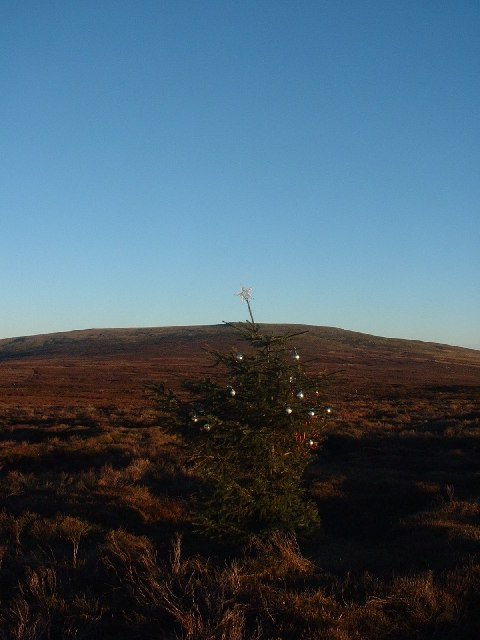 The Only Tree on the Fell