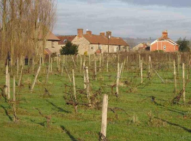 Coxley Vineyard