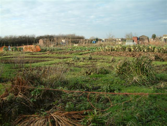 Wanborough Allotments