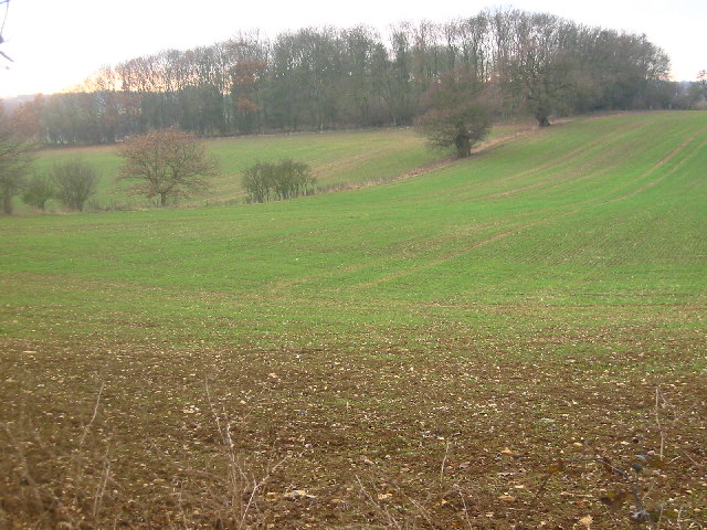 Barnacks Hill Wood