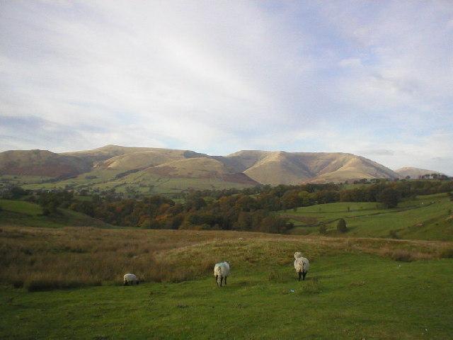 Garsdale Sheep