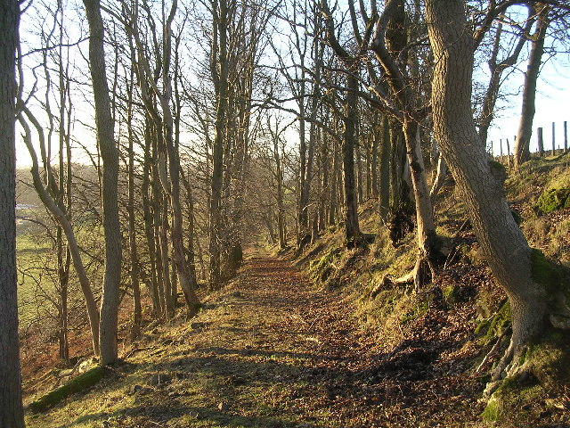 Woodland track near Easterton Farm