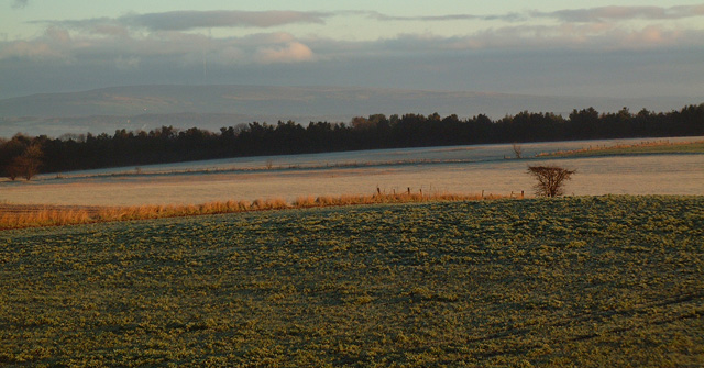 Frosty Fields on Christmas Morning