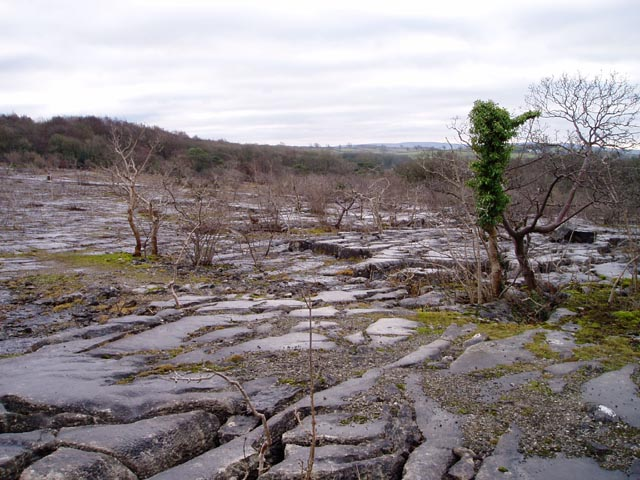 Limestone pavement, Clawthorpe Fell