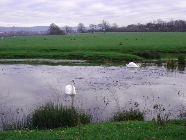 Gwernigron Pond