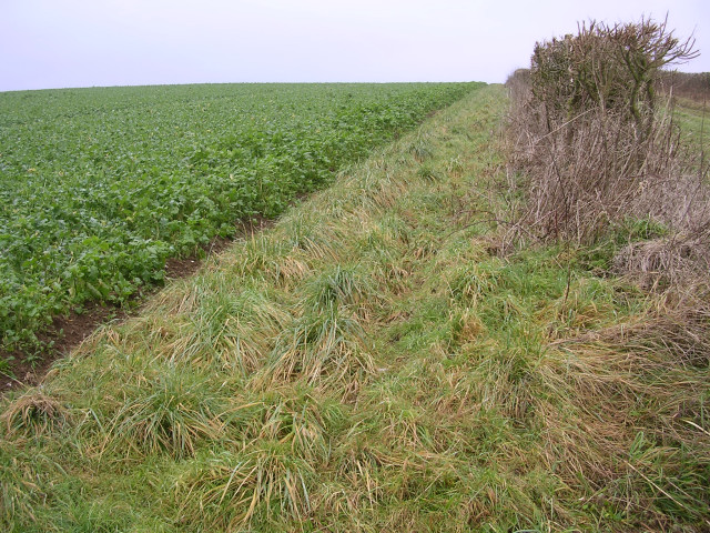 Crop and hedge on Bourne Hill