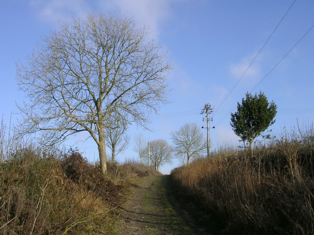 Bridleway north of Piddlehinton