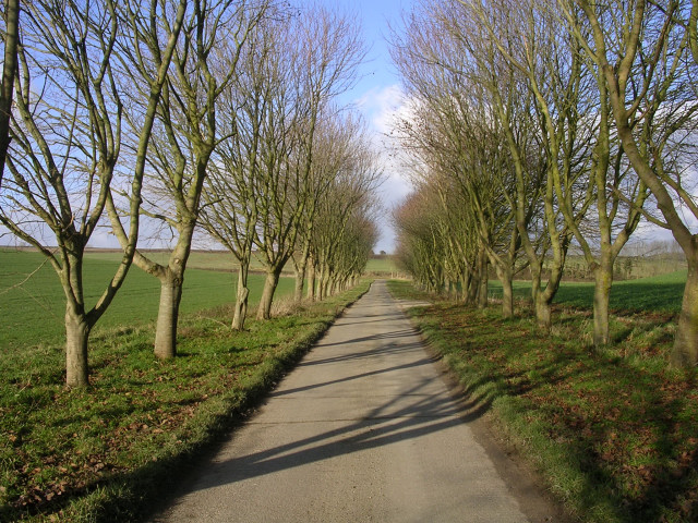 Avenue leading away from Bourne Farm