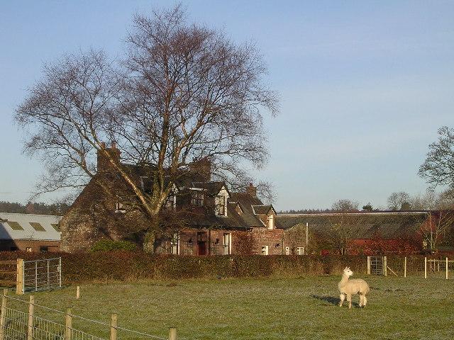 Ballochruin Farm plus Llama