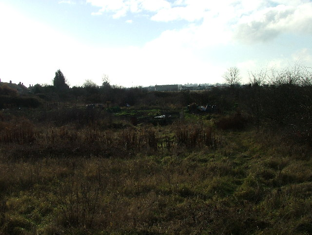 Allotments in Stotfold.