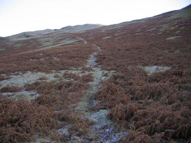 A path to the top of Sale Fell.